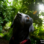 Minnie, Woof Factor, rescue, Oldies Club, labrador, photo competition